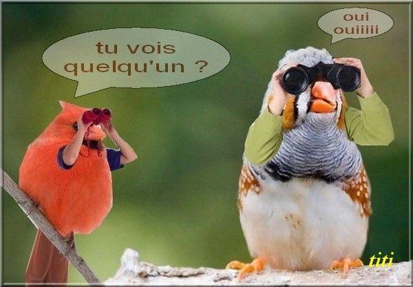 droles-d-animaux-oiseaux