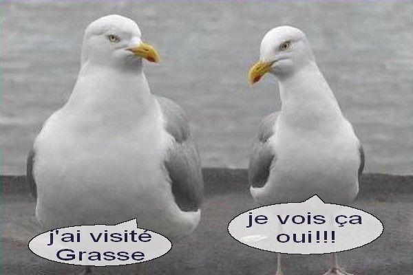 oiseaux-vacances-chez-titi